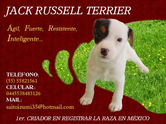 Jack Russell Terrier <br> Leopolda Martínez