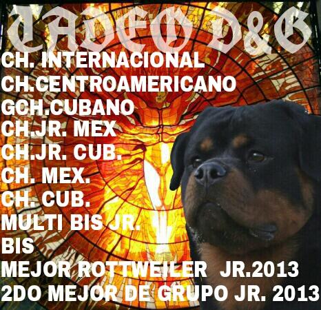 Rottweiler <br> Arturo Diaz