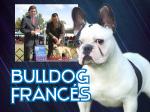 Bulldog Francés <br> Gustavo Elizalde