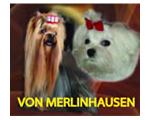Von Merlinshausen