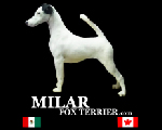 Milar Fox Terrier