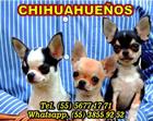 Chihuahueños de Moreno