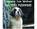 San Walvor