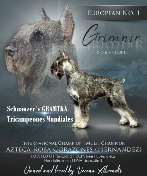 Schnauzer Gigante <br> Carlos Hernández